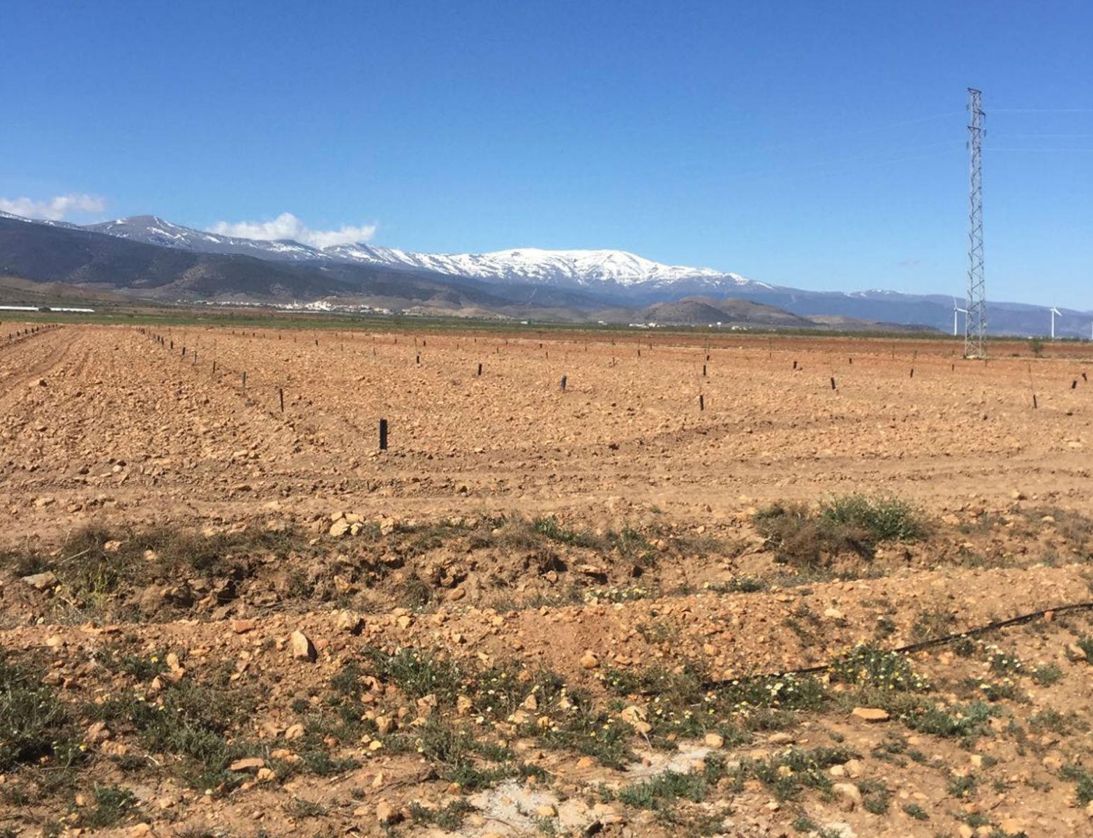 Proyecto-Agroclean-Invernaderos-Malla-Sombra-09